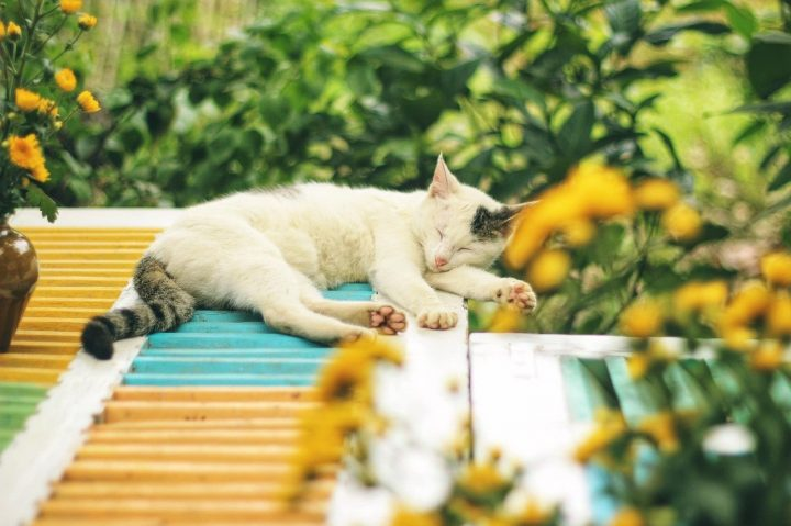 assurance santé pour chat pas chère